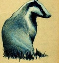 Paul Gosselin - The Badger