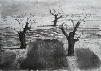 sawed apple trees